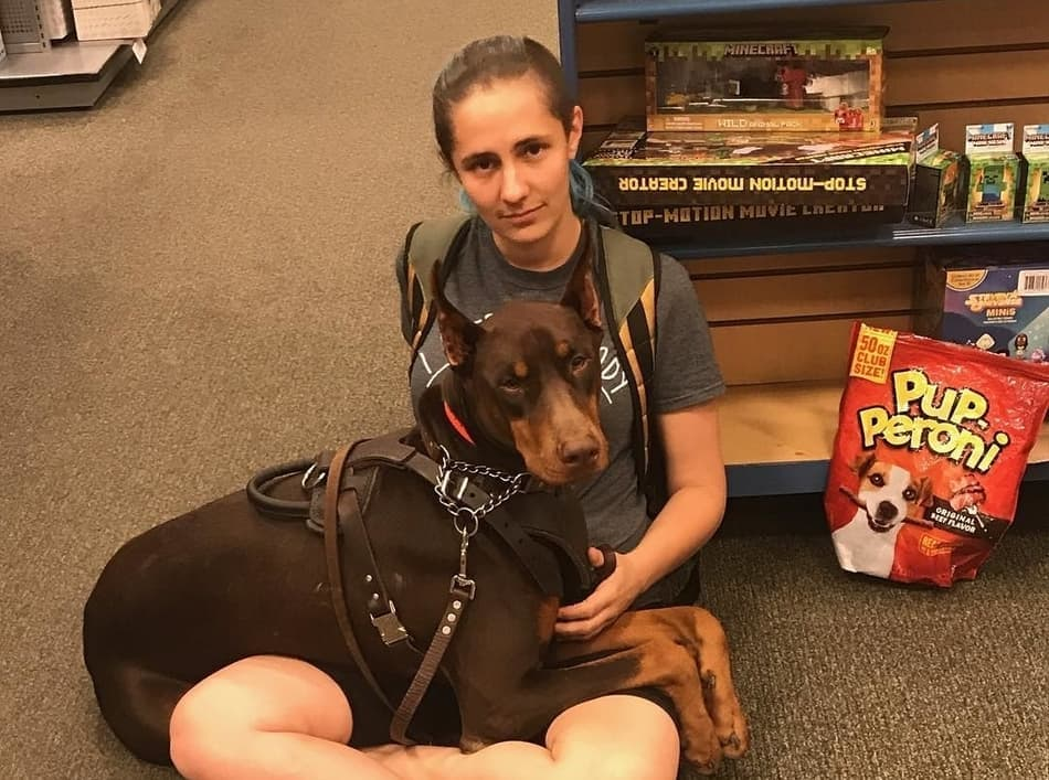 A Doberman service dog caring for it's owner.