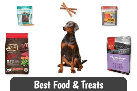 Best Food & Treats for Dobermans