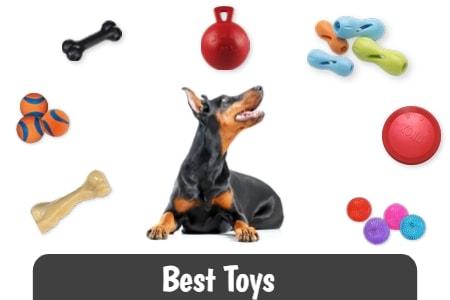 Best Toys for Doberman Pinschers