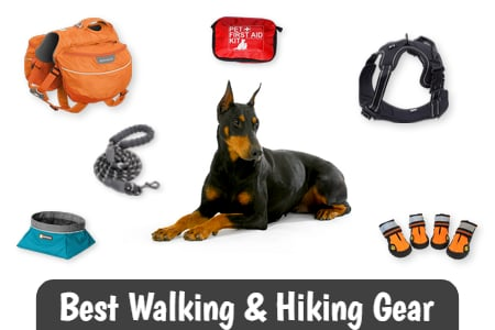 Best Walking and Hiking Gear for Dobermans
