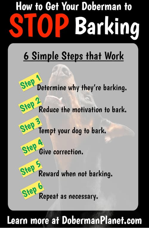 How to Stop Your Doberman from Barking Infographic