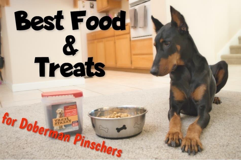 Best Food and Treats for Doberman Pinschers