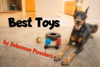 Best Toys for Doberman Pinschers