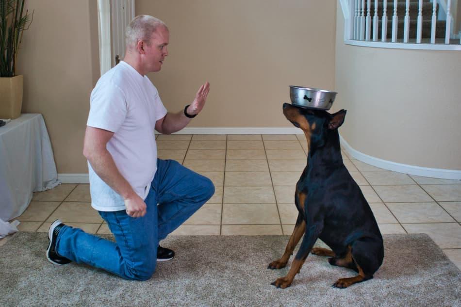 Easy Tricks to Teach a Doberman