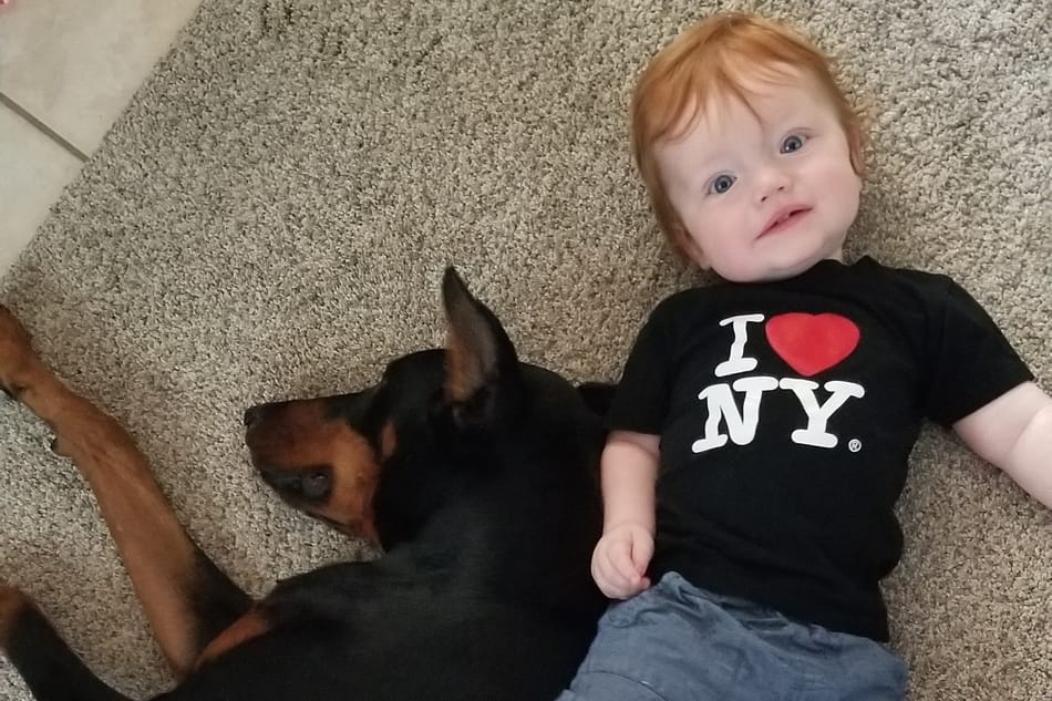 Doberman and a kid playing on the floor together.