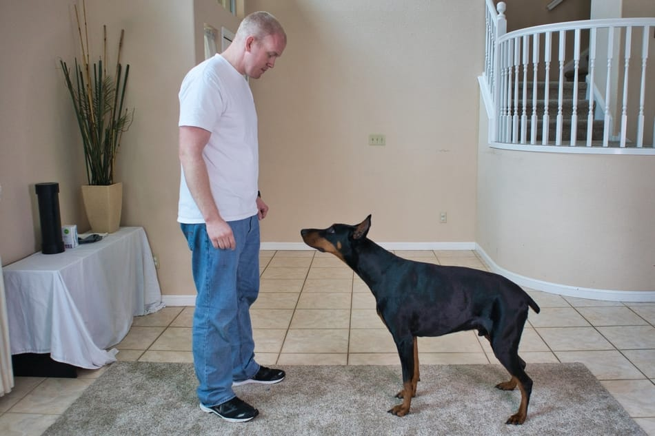 Practicing the come command with my Doberman.