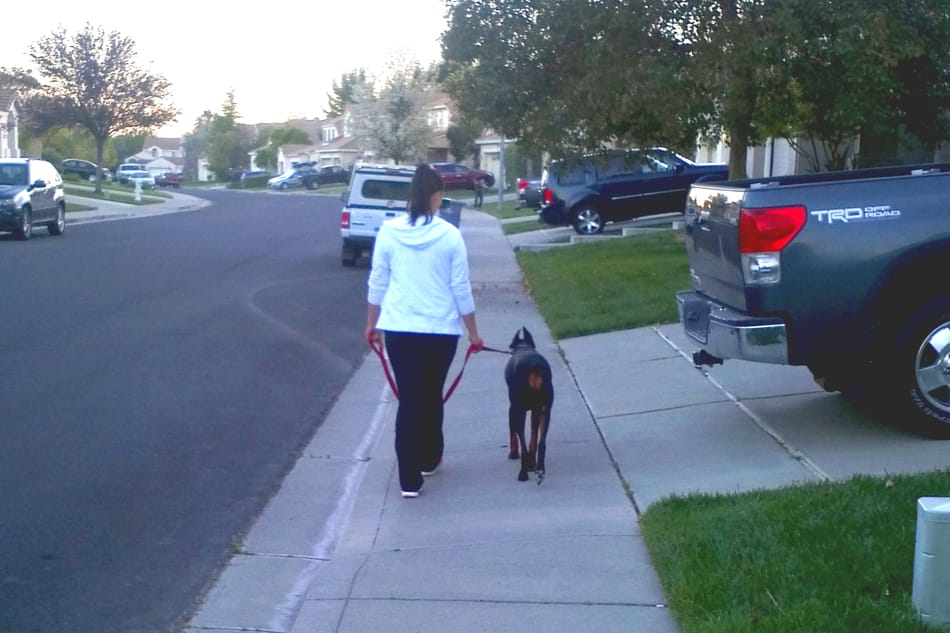 My wife leash training our Doberman Cooper.