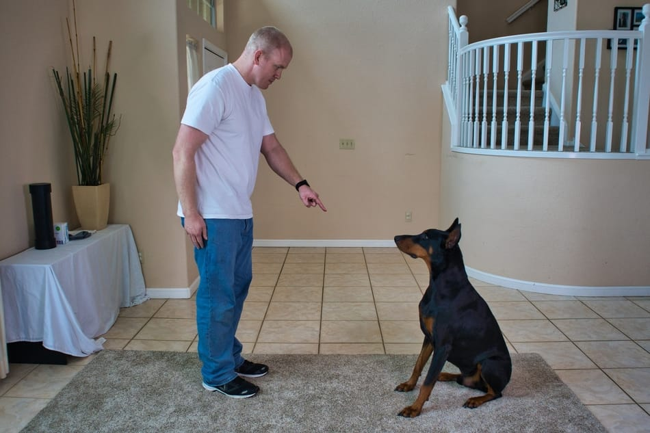 Using a visual cue to get my Doberman to sit on command.