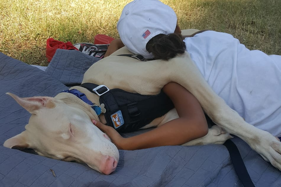 White Doberman relaxing with his owner.