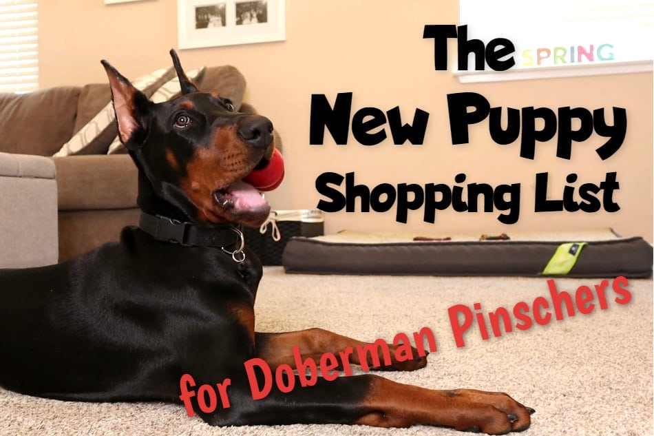 Doberman puppy surrounding by toys and other must have products.