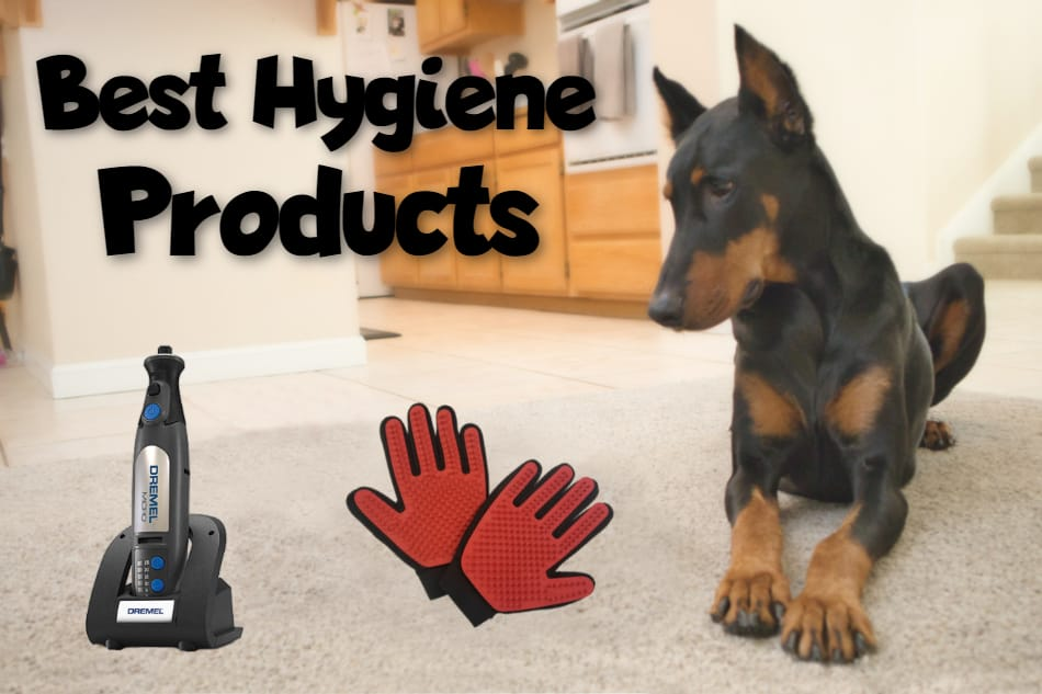 A Doberman looking at various hygiene products and title image.