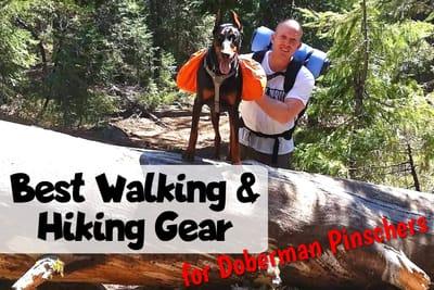 Best Doberman Walking and Hiking Gear Title Image